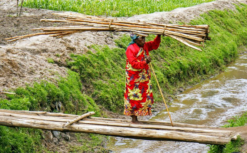 Woman in bright coloured dress is carrying a load of poles on her head while walking barefoot on a small bridge over a canal