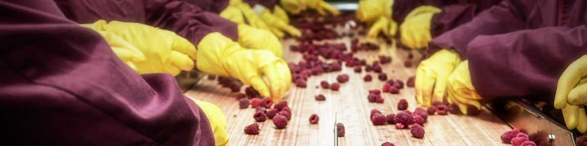 The revision of ISO 22000 on food management moves one step further