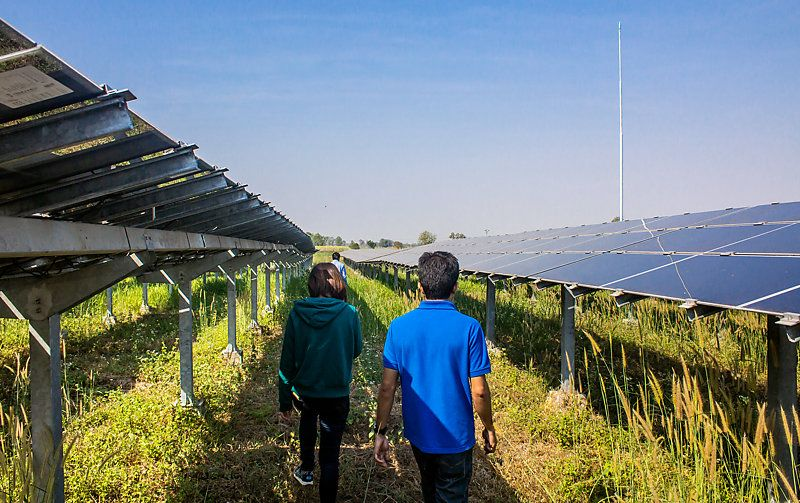 People walking through a solar farm.