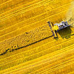Aerial view of a combine harvester in a golden wheat field.