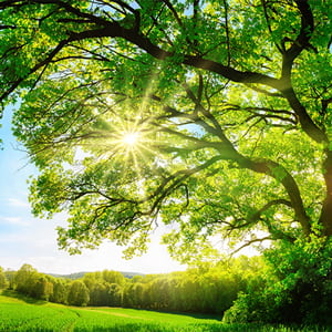 The sun shines through the branches of a majestic oak tree amidst the rolling green countryside.