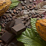Cocoa composition with two real cacao fruits, cacao leaves, nibs and dark chocolate chunks in the center, showing the different stages of chocolate.