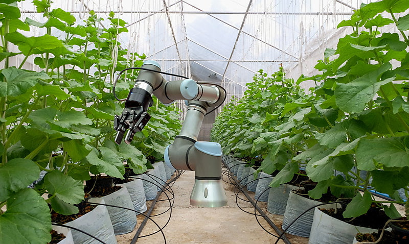 Smart-robot-installed-inside-the-greenhouse.