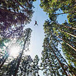 Man on a zip line flying through the forest canopy.