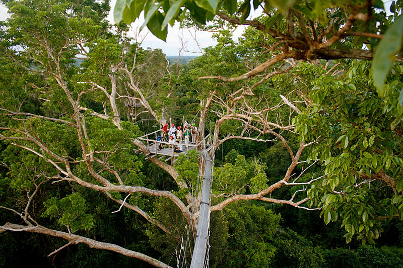 Canopy tree climbing in the Amazon rainforest.