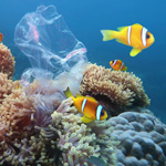 Beautiful coral reef with sea anemones and clownfish polluted with plastic bag.