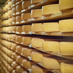 Racks of cheese wheels on shelves.