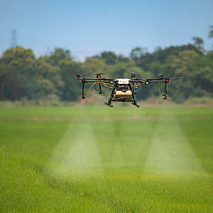 An agricultural drone sprays fertilizer on a rice field.