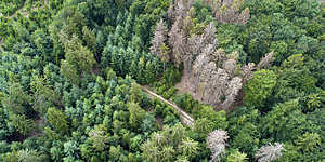 Aerial view of a cluster of dead trees in a forest in Waldsterben, Germany