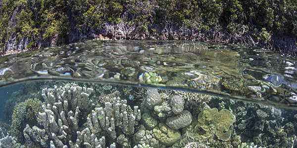 A healthy and diverse coral reef grows near limestone islands in Raja Ampat, Indonesia.