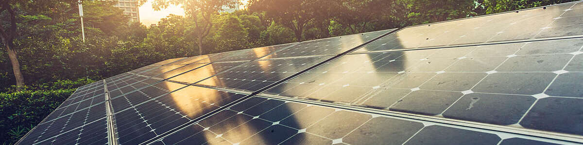 Rooftop solar panels immersed in greenery with glimpse of a building through the foliage.
